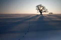 L'hiver III Images libres de droits