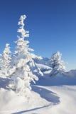 L'hiver La neige a couvert les sapins et le ciel bleu Paysage d'Ural photographie stock libre de droits
