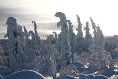 L'hiver Laponie Photo libre de droits