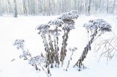 L'hiver Macro Herbe surgelée sur le fond de neige Usines dans le gel photos stock