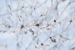 L'hiver Macro Herbe surgelée sur le fond de neige Usines dans le gel photo libre de droits