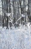 L'hiver Macro Herbe surgelée sur le fond de neige Usines dans le gel image libre de droits