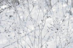 L'hiver Macro Herbe surgelée sur le fond de neige Usines dans le gel photographie stock