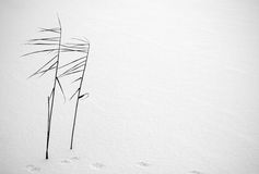 l'hiver minimal Photographie stock