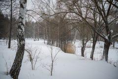 L'hiver neige bouleaux Image stock