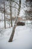 L'hiver neige bouleaux Images stock
