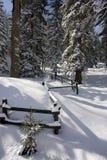 l'hiver neigeux d'horizontal Image libre de droits