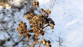 L'hiver plante le fond Paysage de nature d'hiver Zone verte Photos libres de droits