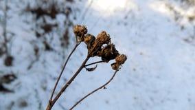 L'hiver plante le fond Paysage de nature d'hiver Zone verte Photographie stock