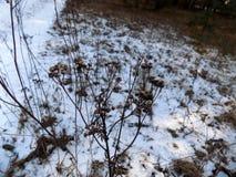 L'hiver plante le fond Paysage de nature de forêt d'hiver Champ blanc vert Photographie stock