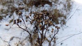 L'hiver plante le fond Paysage de nature de forêt d'hiver Zone verte Photos libres de droits