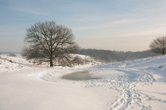 L'hiver scénique Photos libres de droits