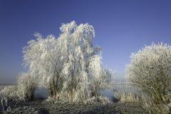 L'hiver scénique Photo libre de droits