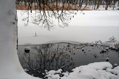 L'hiver sur le lac Tronc d'un arbre dans la neige photos libres de droits