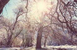 L'hiver tôt image stock