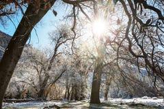 L'hiver tôt images stock