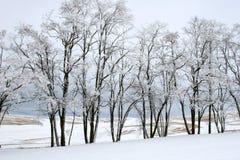 L'hiver Treeline Photos libres de droits