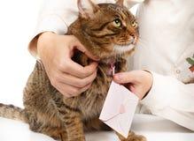 L'homme accroche l'enveloppe rose de lettre d'amour sur le cou de beau pelucheux Images libres de droits