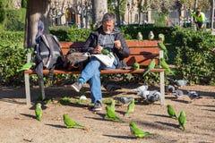 L'homme alimente des perroquets et des pigeons images stock