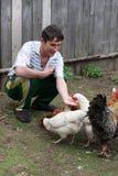 L'homme alimente des poules Photographie stock libre de droits