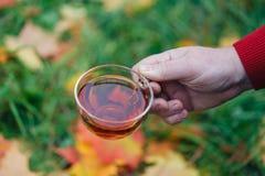 L'homme avec la tasse de la promenade de thé en parc d'automne avec l'érable part Image stock
