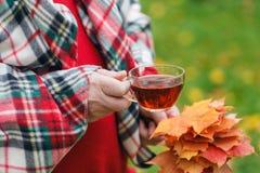 L'homme avec la tasse de la promenade de thé en parc d'automne avec l'érable part Images libres de droits