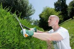 L'homme coupe des buissons avec des tondeuses près de la maison Image libre de droits