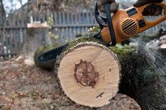 L'homme coupe l'arbre avec la scie électrique Photographie stock libre de droits
