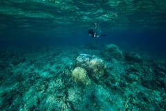 L'homme de Freediver explorent la vie marine en mer image stock