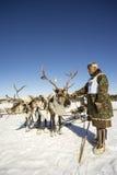 L'homme de Khanty garde des cerfs communs avant le début Image libre de droits