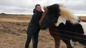 L'homme frotte les chevaux islandais clips vidéos