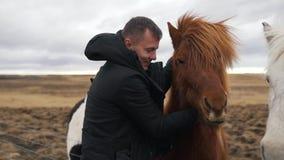 L'homme frotte les chevaux islandais banque de vidéos