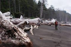 L'homme imprime le sable noir pendant qu'il marche parmi les arbres morts colossaux Photos libres de droits