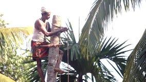 L'homme local étreint le tronc d'arbre et le dessus de palmier de liens avec la corde banque de vidéos