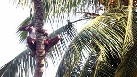L'homme local s'assied sur le tronc de palmier sur le bâton coupant des branches banque de vidéos