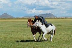 L'homme mongol utilisant le costume traditionnel monte deux chevaux sauvages en steppe dans Kharkhorin, Mongolie image libre de droits