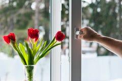 Fenêtre avec la moustiquaire Photos libres de droits