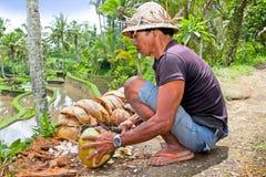 L'homme ouvre la noix de coco verte tropicale Image libre de droits