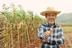 L'homme plus âgé mûr heureux de portrait sourit Vieil agriculteur supérieur avec le pouce de barbe blanche vers le haut de se sen photos stock
