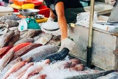 L'homme préparent des poissons pour la vente Image stock