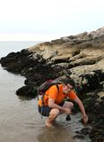 L'homme prend beaucoup de moules noires sur la roche photo libre de droits