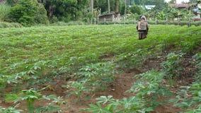 L'homme pulvérise le manioc banque de vidéos
