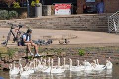 L'homme s'est assis sur le mur de canal avec beaucoup de cygnes par ses pieds qui balancent dans l'eau Photo libre de droits
