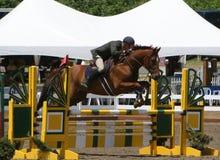 L'homme sautant Oxer Photos stock