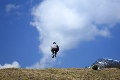L'homme saute dans le ciel Photo libre de droits