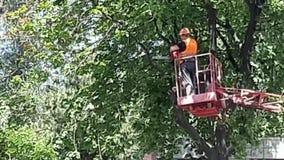 L'homme scie un arbre Vidéo de tronçonneuse banque de vidéos