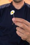 L'homme se tient dans une petite marguerite blanche de main Conjectures sur la camomille pour l'amour Images stock