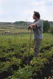 L'homme sur la zone des pommes de terre Photographie stock libre de droits