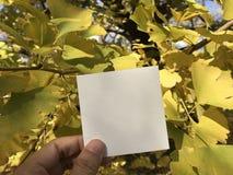 L'homme tient le livre blanc avec les feuilles jaunes de ginkgo Photos libres de droits