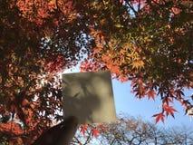 L'homme tient le livre blanc avec les feuilles oranges d'érable, les arbres et le ciel bleu gentil Photographie stock